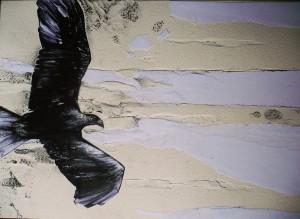 lo sguardo dell'aquila - 2011